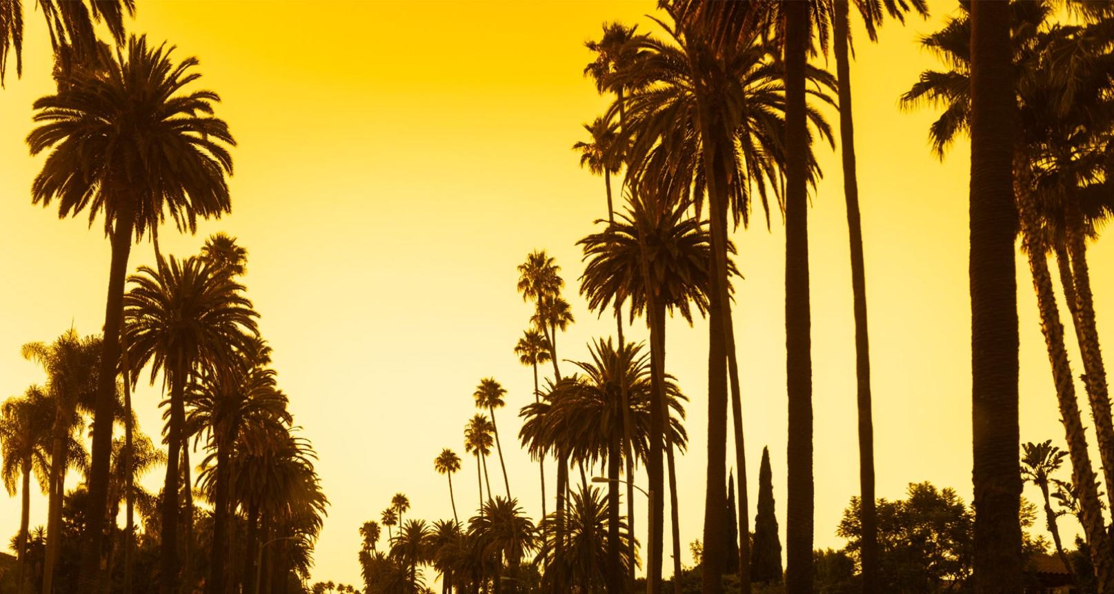 Yellow LA.jpg