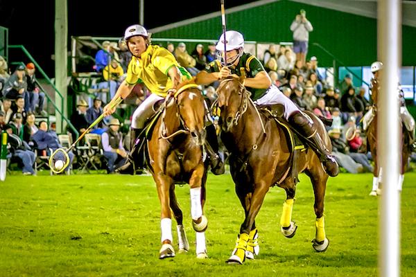 Polocrosse horses.jpg