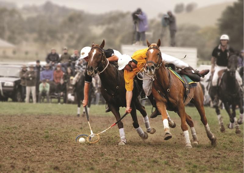Australian Stock Horse playing polocrosse.jpg