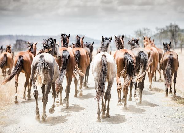 FINCH FARM HORSE TAILS.jpg