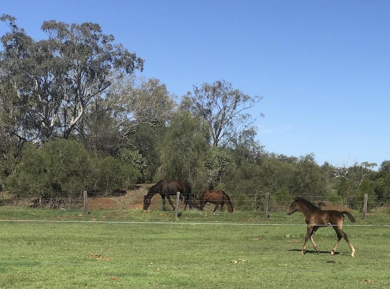 One of Lauren's foals