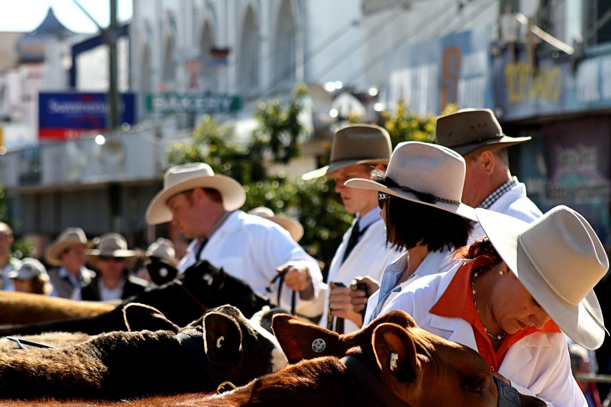 Cattle-Comps.jpg