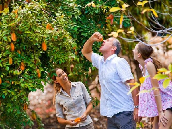 Laughing at Dad at Tropical Fruit World.jpeg