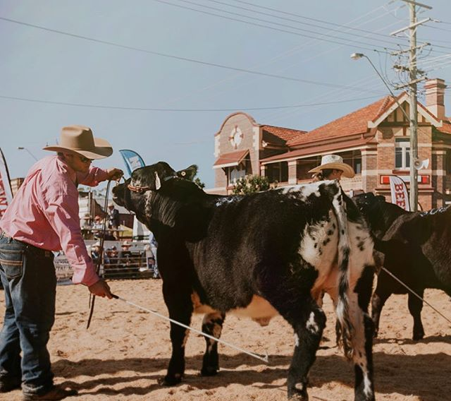 This photo by @jules_middlebrook showcases the unique element of our beef week. The cattle ring surrounded by the heritage buildings in the Casino CBD. What a spectacle 🐮👍