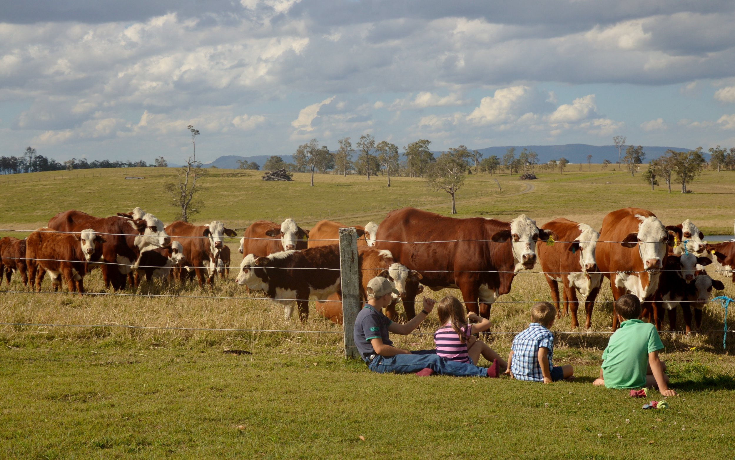 Kids and cows 16.JPG