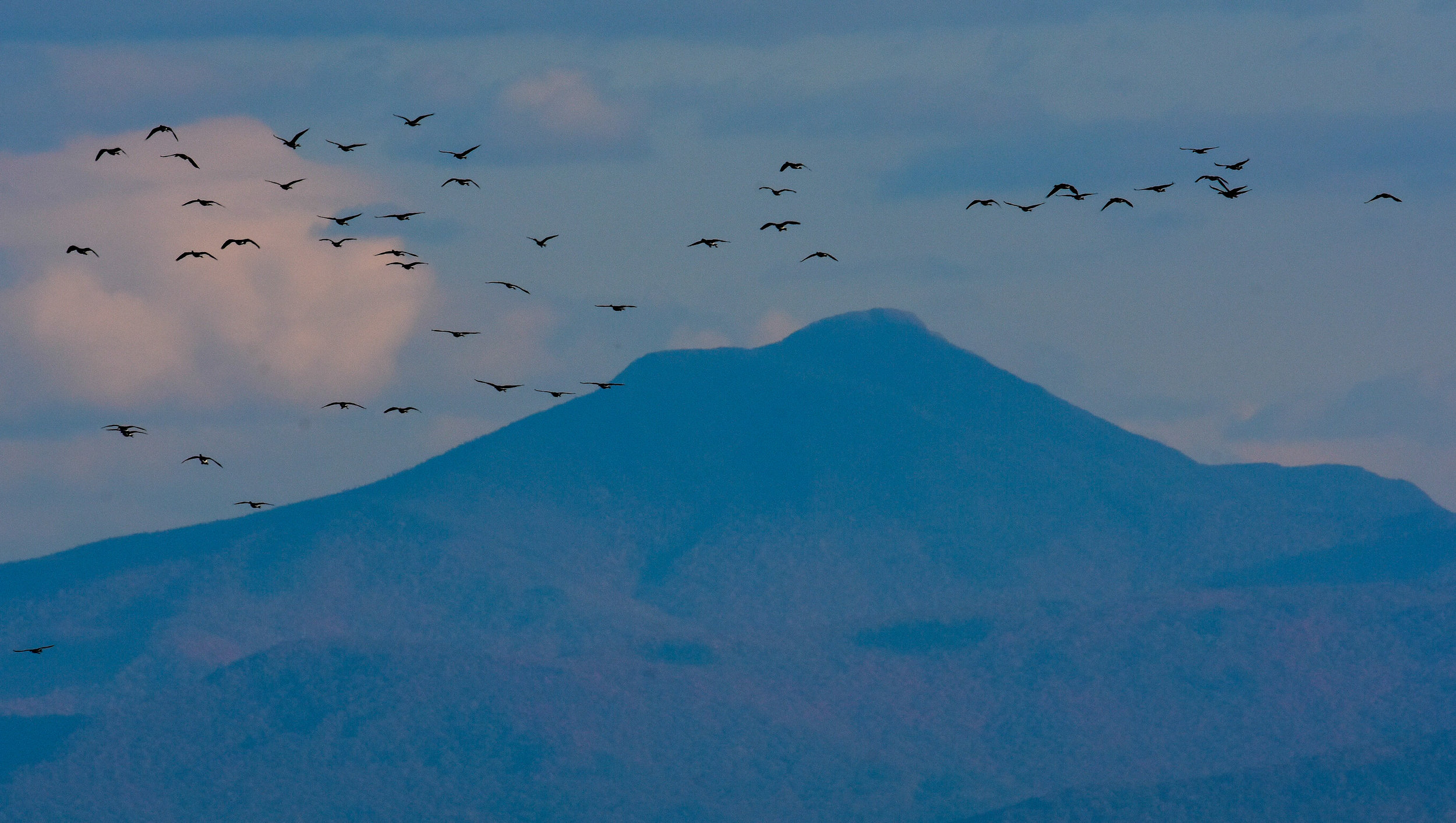Camel's Hump with Canadian Geese