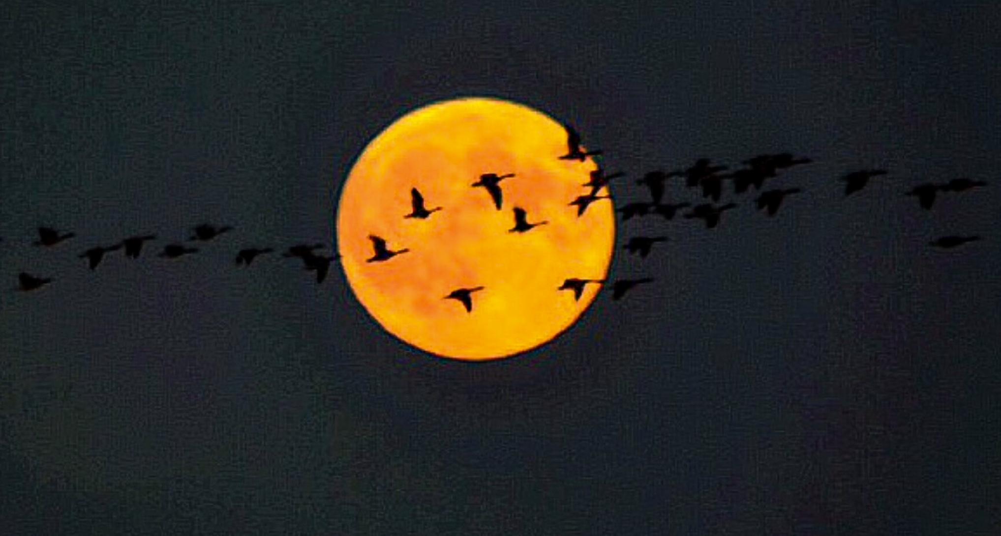Full Moon and Geese.jpg