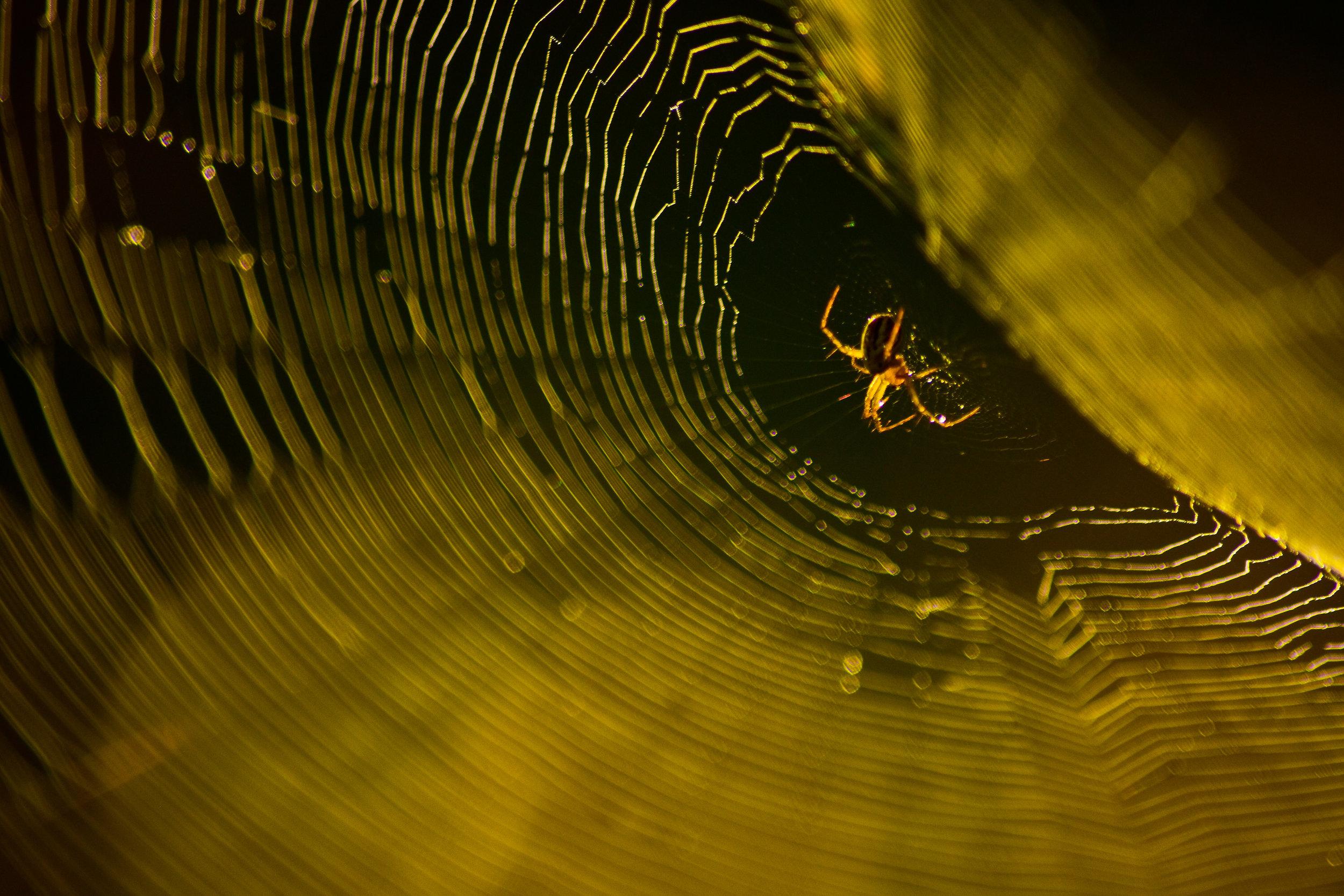 Spider in Spider Web.JPG