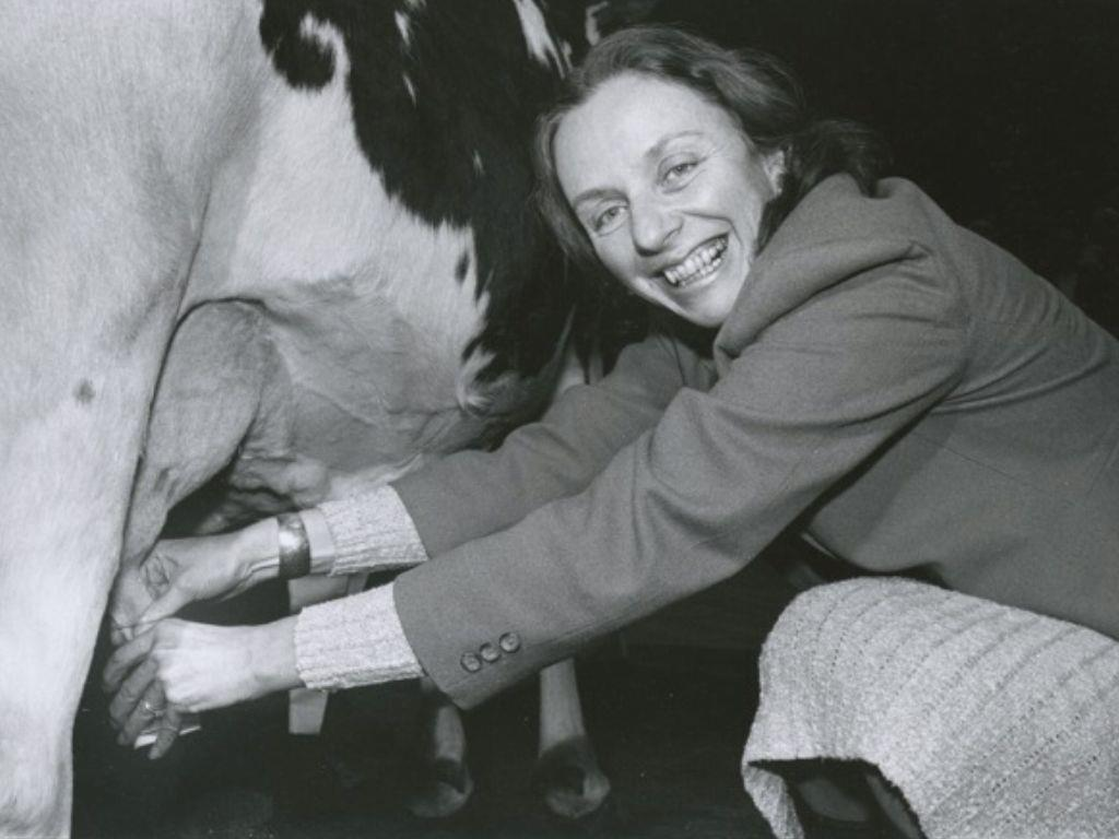 Madeleine Kunin Milking a Cow