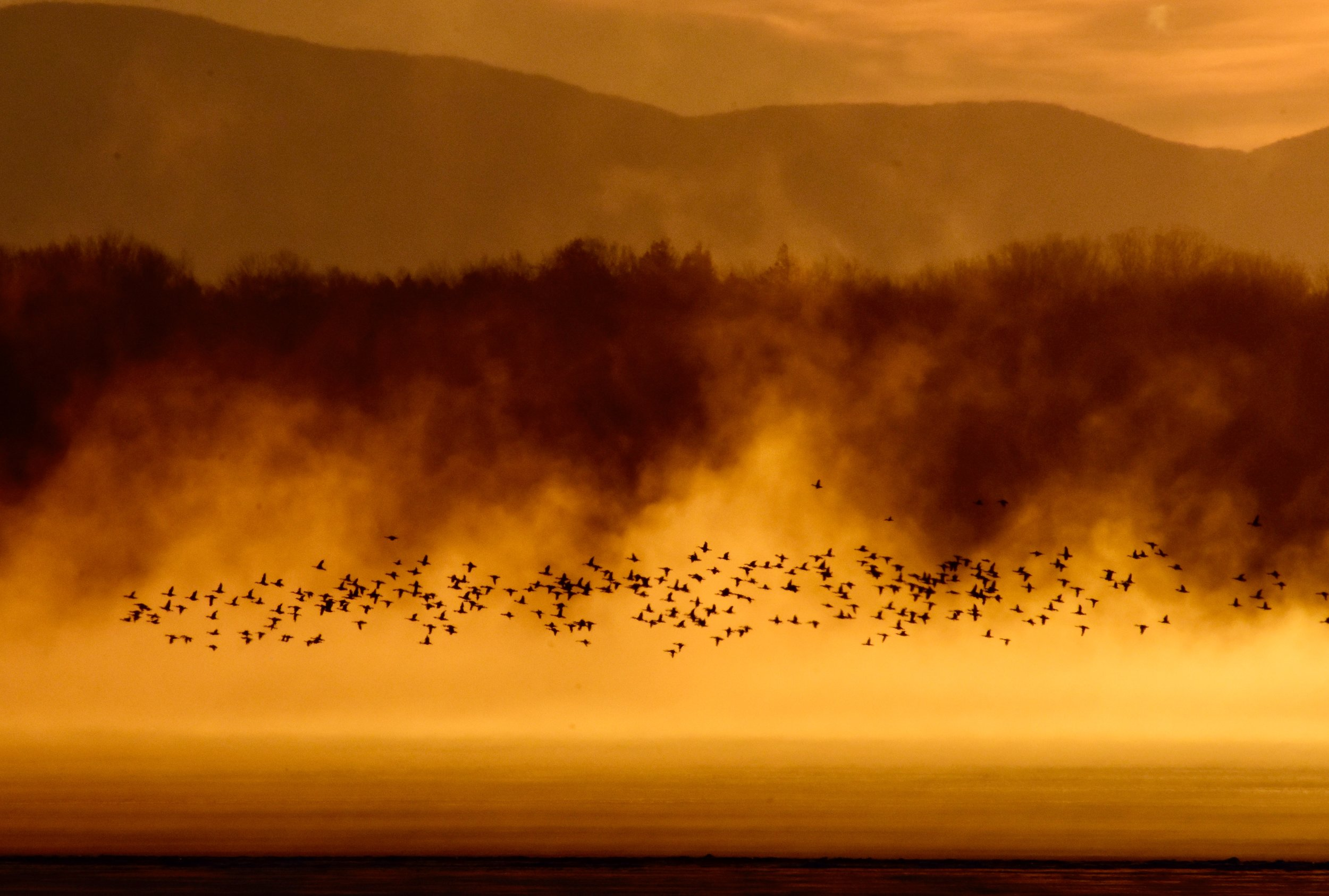 Geese and Steam over Lake Champlain at Sunrise_1