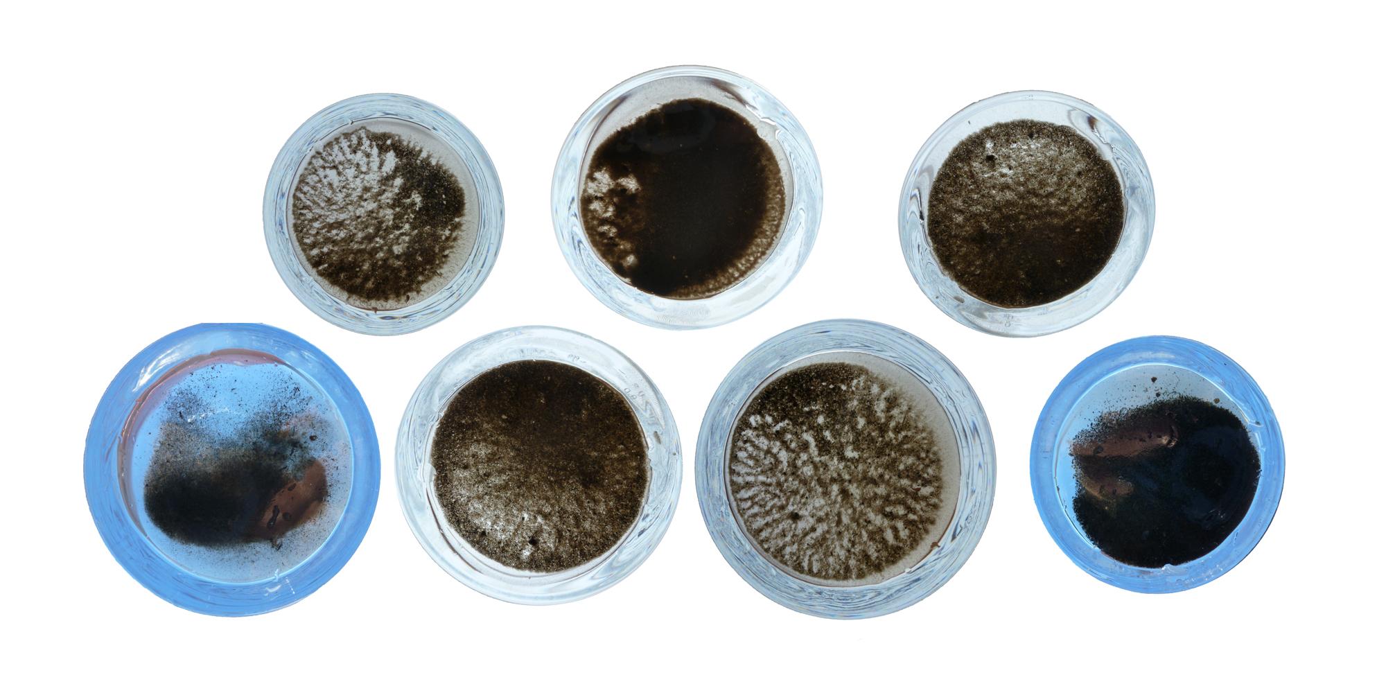 Sediment Samples.jpg
