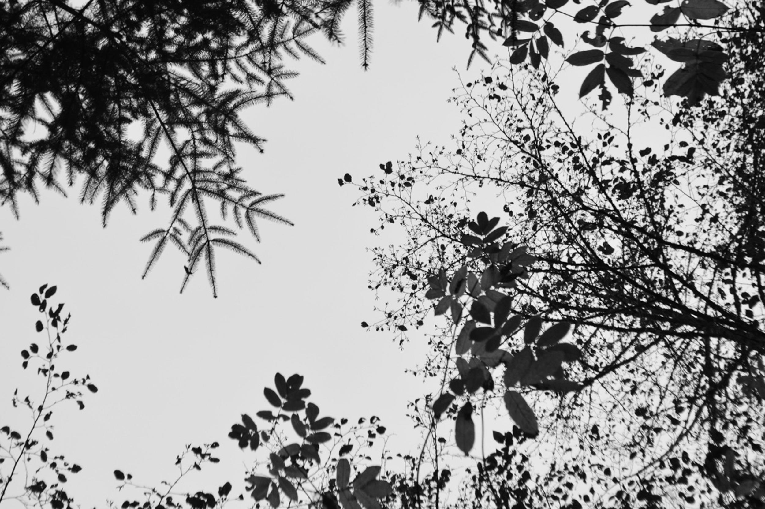 sitehumboldt-47.jpg