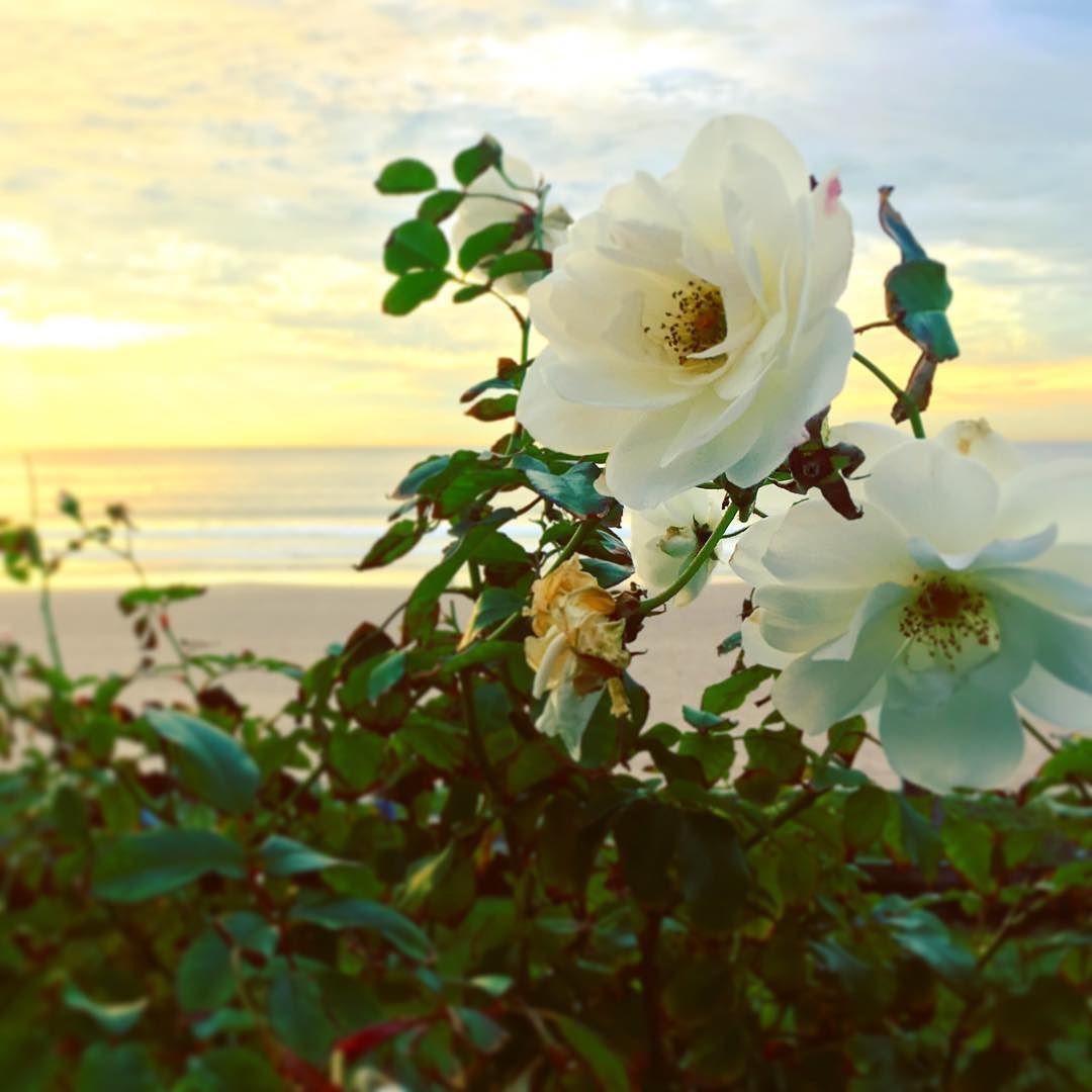 Beach_blooms__.jpg
