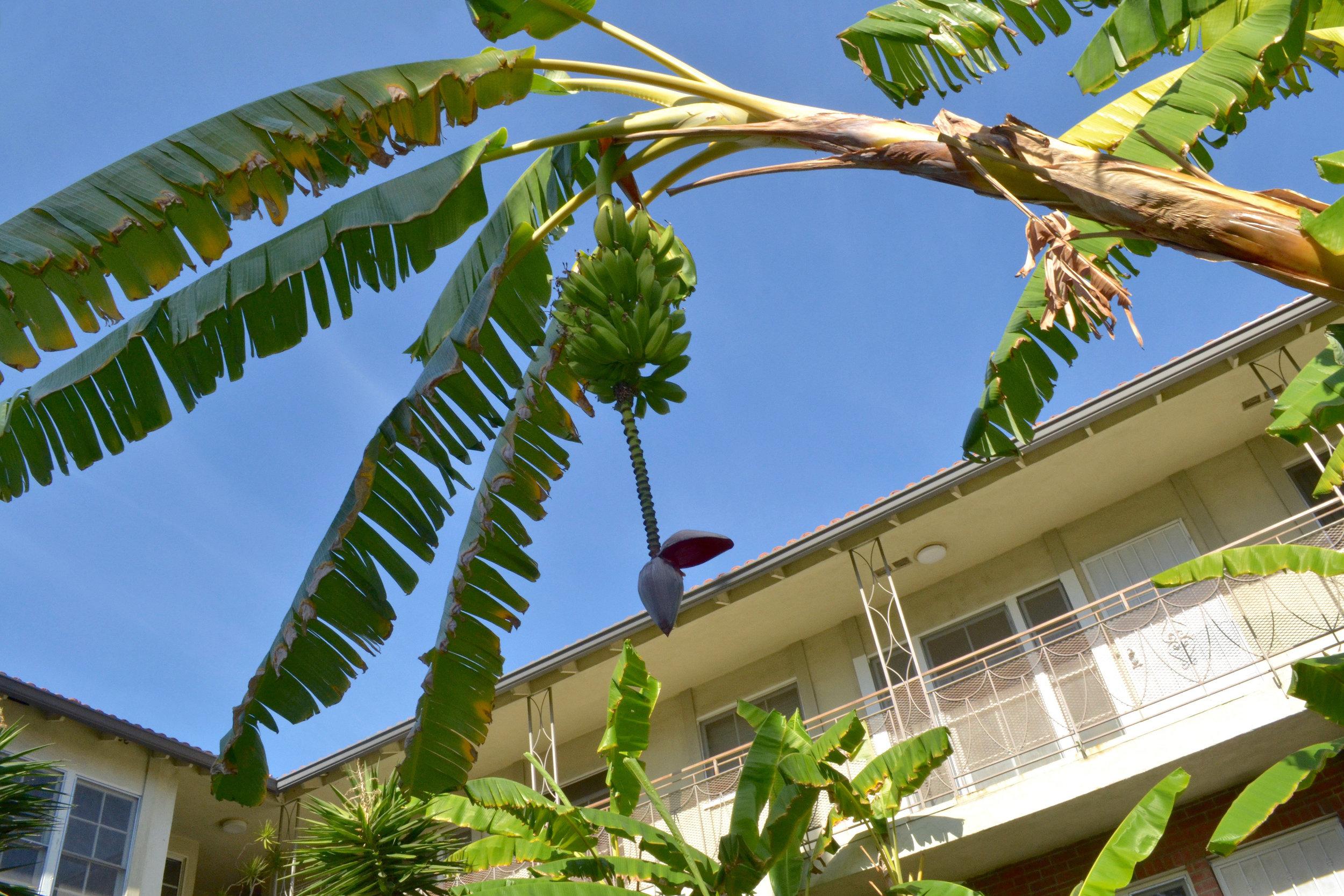 Fisch Properties - Residential - Real Estate - Los Angeles.jpg