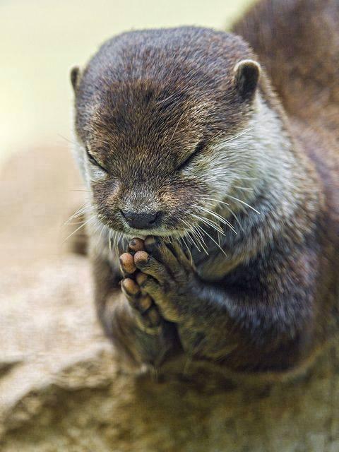 Reverant Otter.jpg