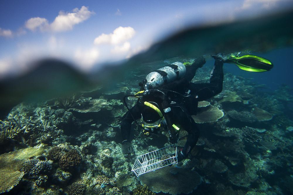 20170723_Great_Barrier_Reef_0078.jpg