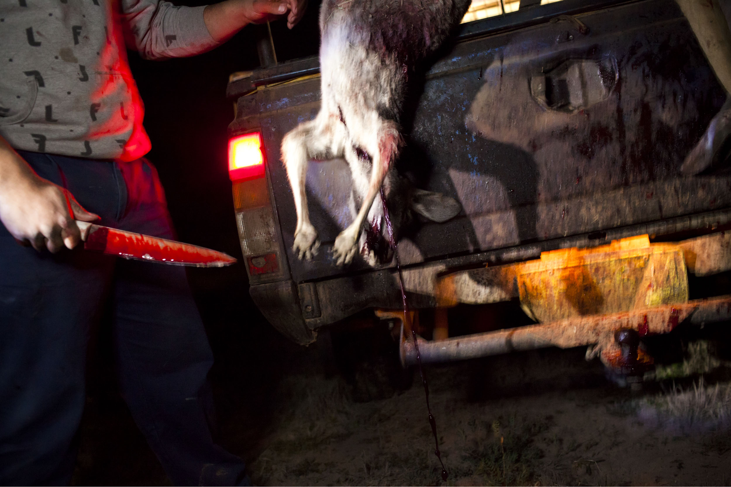 A kangaroo is gutted in the bushland surrounding the Aboriginal community of Wilcannia.