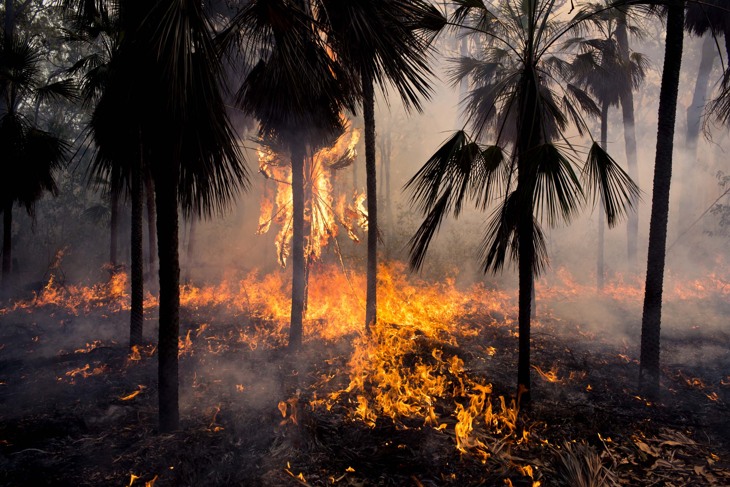 A controlled bushfire on Melville Island, Northern Territory.
