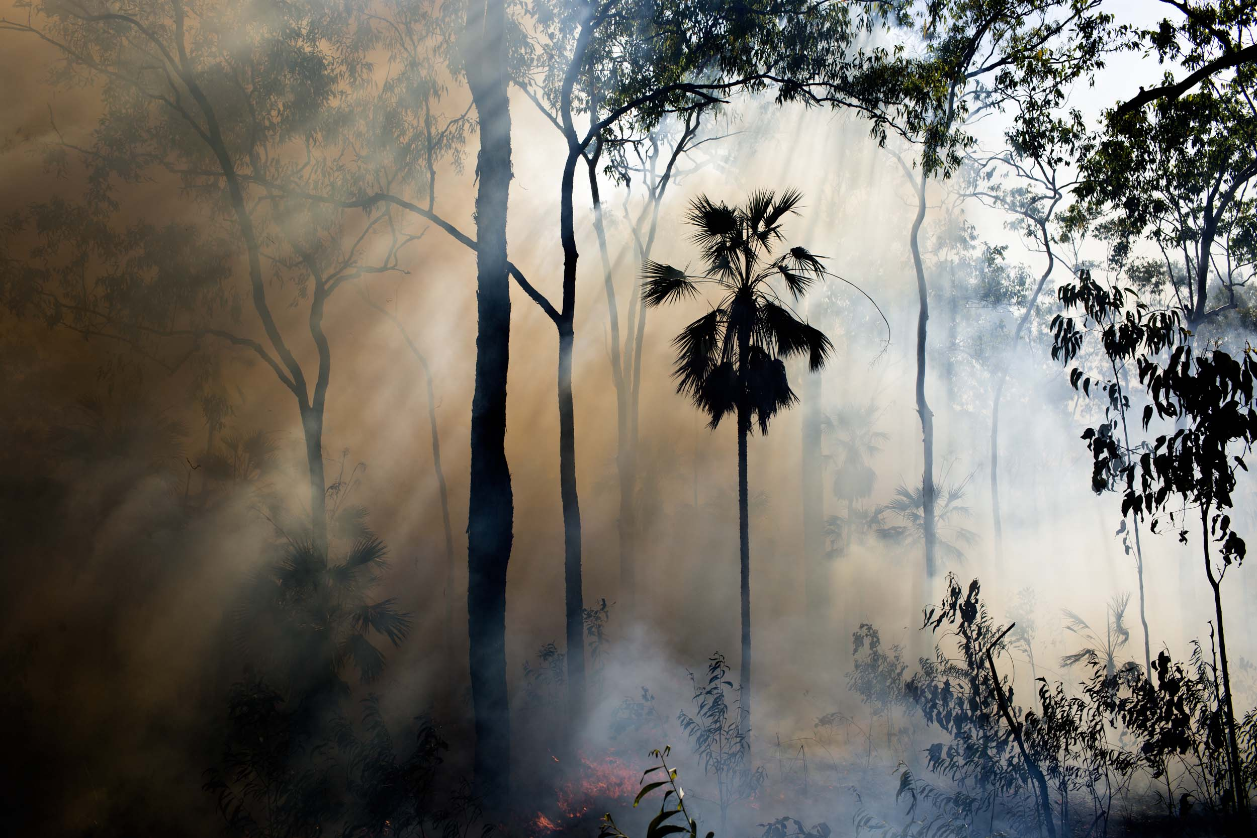 Sunlight filters through smoke from a controlled bushfire on Melville Island, Northern Territory.