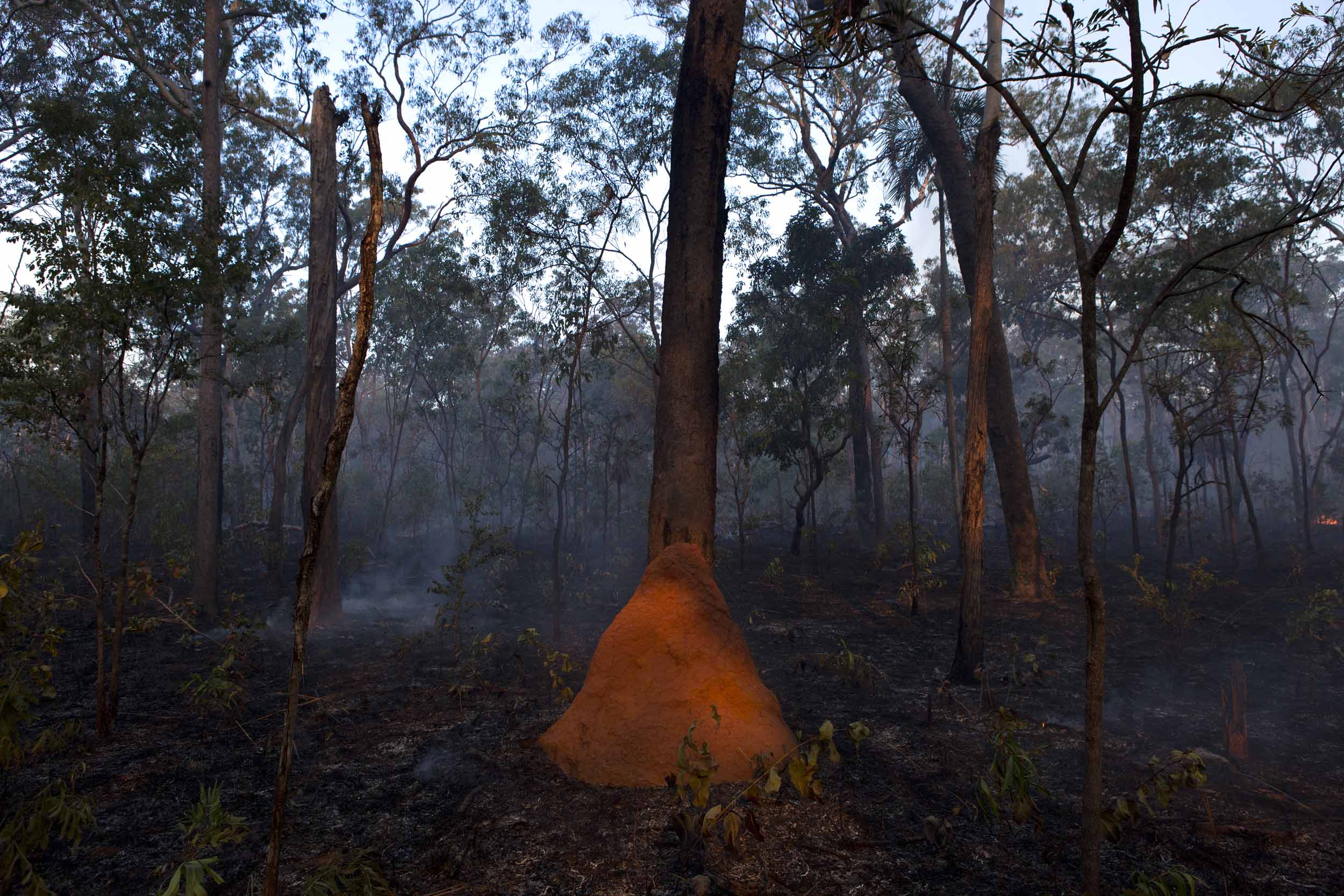 A termite mound on Melville Island, Northern Territory.