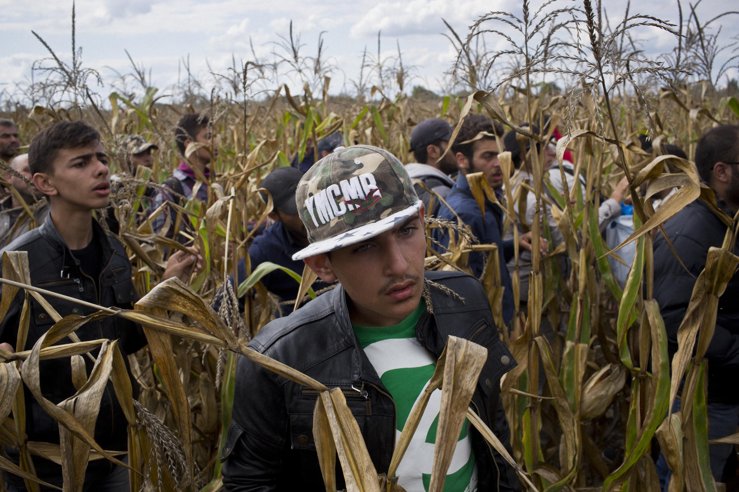 Röszke, Hungary. Refugees flee through cornfields evading police near the Hungary/Serbia border.