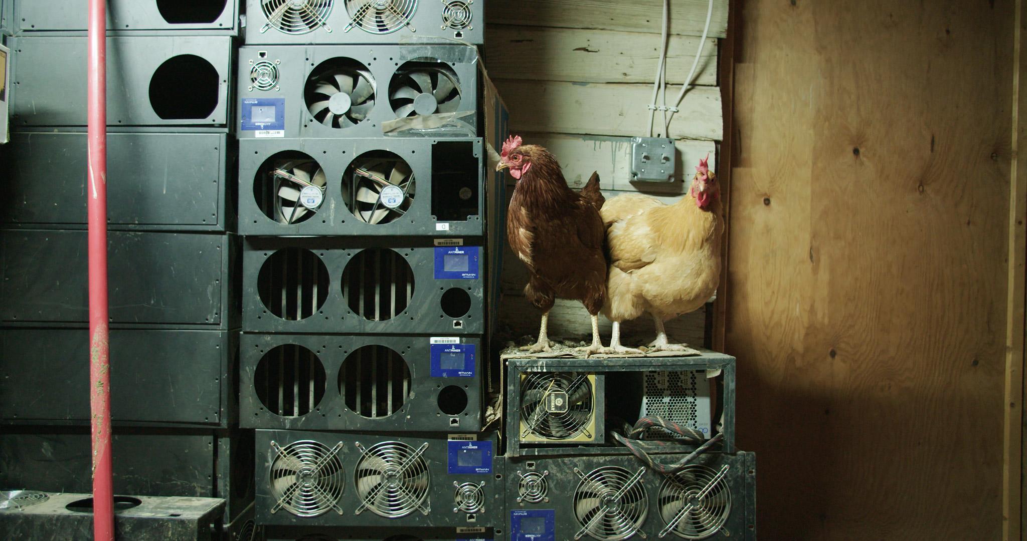 08 Supply Chain Documentary - Alex Tyson .jpg