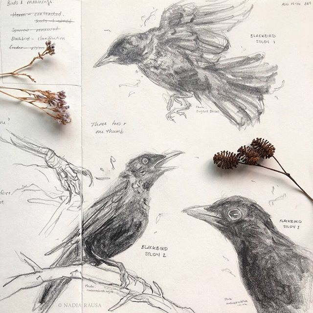 """E N T R Y . 0 0 2 ❉  I studied blackbirds the other day. To my dismay, I realized I knew nothing about their anatomy. I attempted to draw a blackbird in my next zine, POLYMORPH, but realized I definitely needed to do some studies before attempting it again. So, here we are—and I couldn't be happier about the results. I learned a lot just by drawing a blackbird three times, plus a closeup of their feet. They're truly beautiful birds and I love their symbolism (they stand for """"clarification,"""" which is what POLYMORPH will be about). I definitely would love to do more studies and make it regular part of my art journey. ♥ Nadia . Photos referenced from cranberrabirds.com.au, northeastwildlife.co.uk, and Eugene Beckes. . . #blackbird #birdstudy #birddrawing #birdsketching #artstudy #sketchbook #sketchbookdrawing #artjournal"""