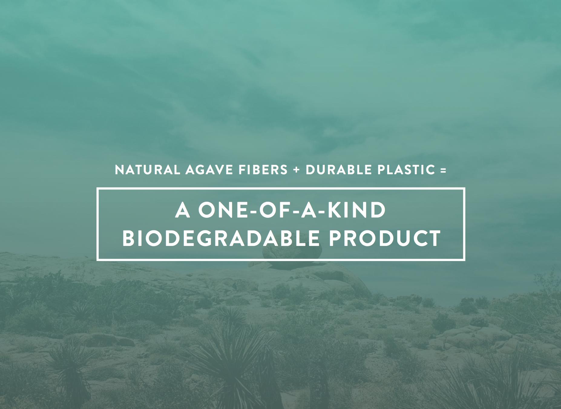 Biodegradable-Pots-Planters-Terragave-06.png