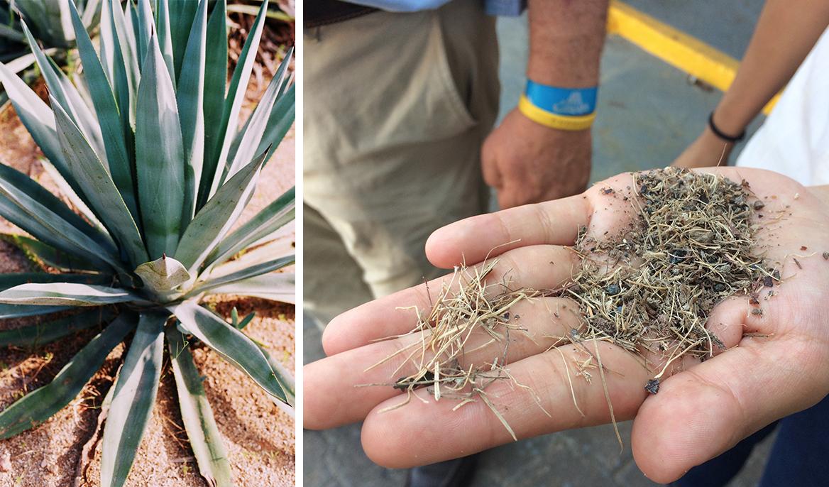 Biodegradable-Pots-Planters-Terragave-EU-01.jpg