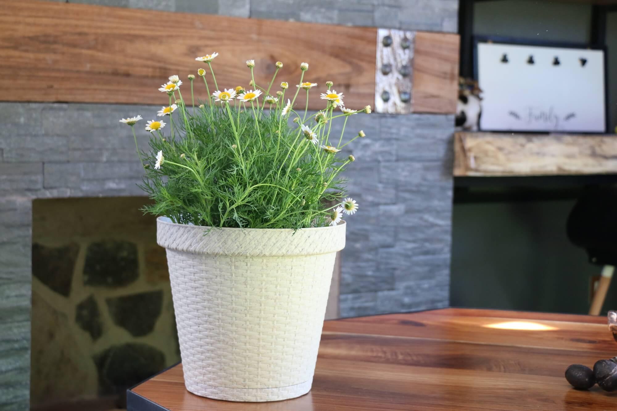 Biodegradable-Pots-Planters-Terragave-EU-04.jpeg