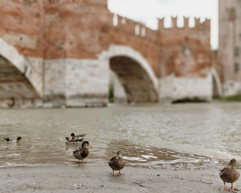 Уточки под мостом ̶К̶р̶е̶м̶л̶я̶ Скалигеров