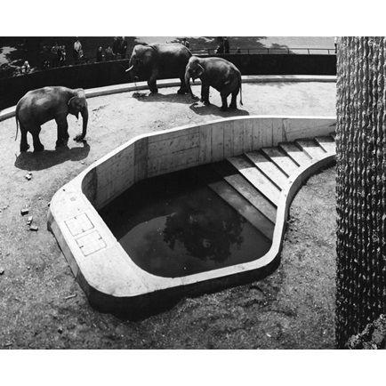 london_zoo_museandmaker_8.jpg