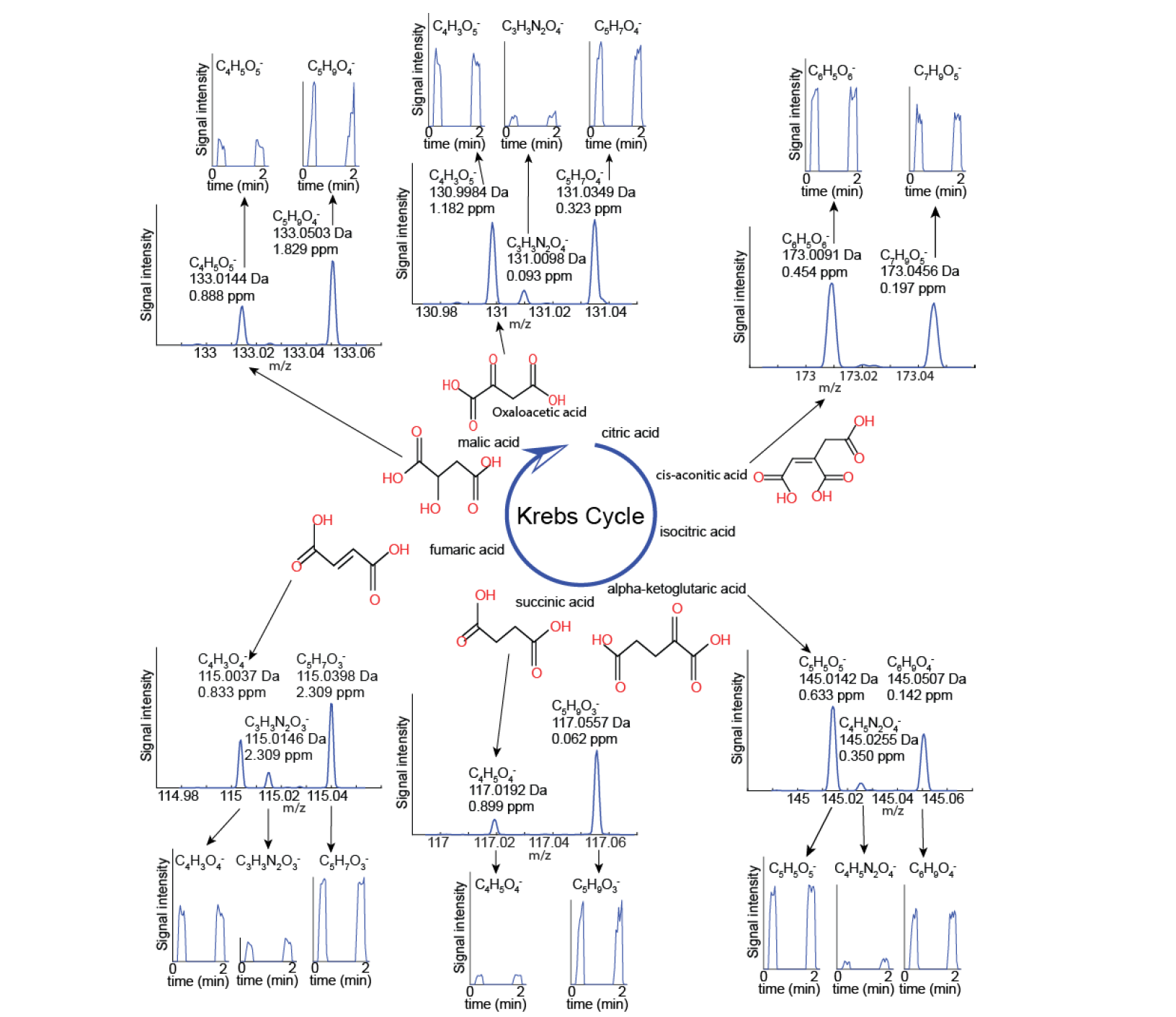 Real-Time Monitoring of Tricarboxylic Acid Metabolites in Exhaled Breath.png