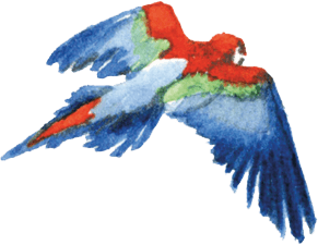 papegaai.png