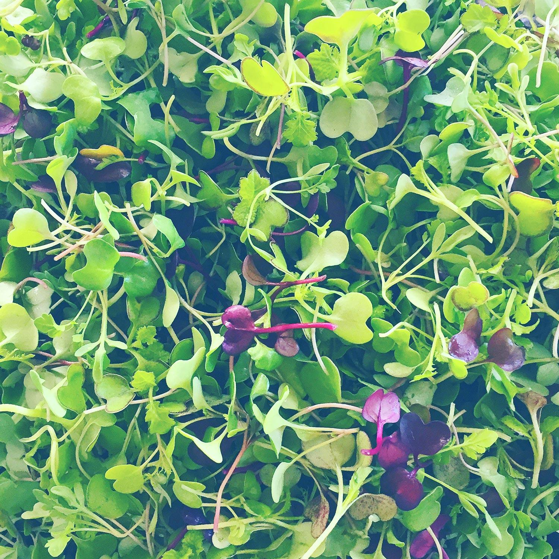 Cloud Nine Farm micro-greens