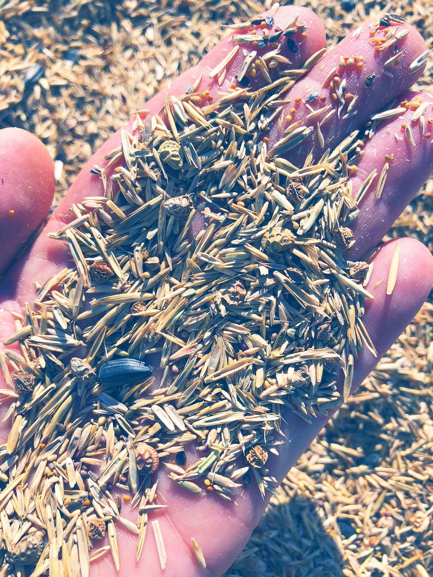 pasture_seed_mix6.jpg