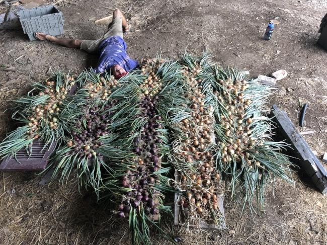 onions alex braid.jpg