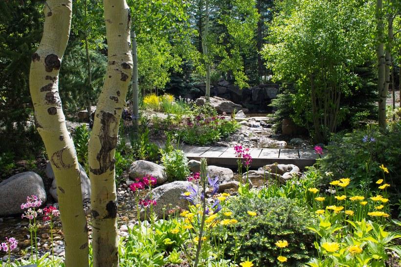 Courtesy Betty Ford Alpine Gardens