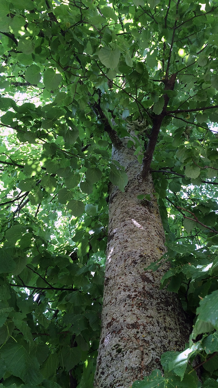 Tree_IMG_4013.jpg
