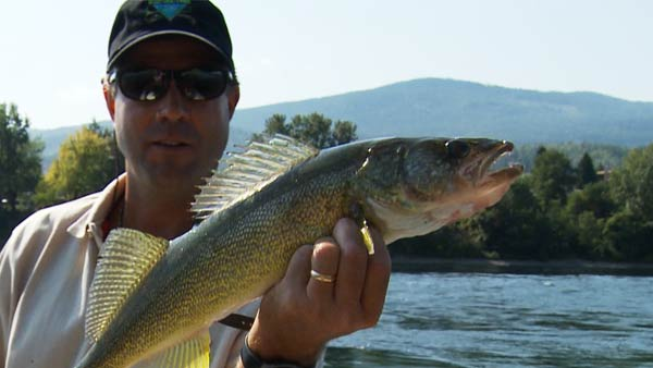 WALLEYE ADVENTURE - 3 People8 Hours of World Class Walleye Fishing$750+tax (total) ($250 per person)