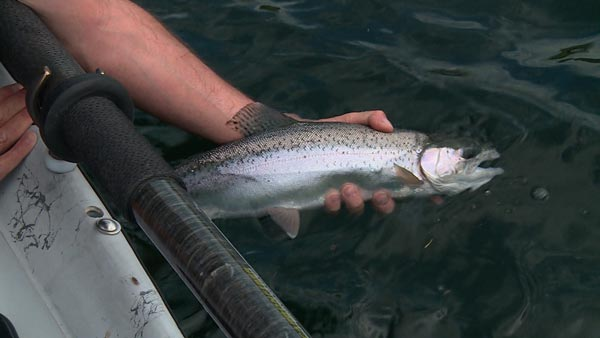 KOOTENAY ARM FIX - 2 PEOPLE4 Hours of Relaxing Fishing$380+tax (total) ($190 per person)