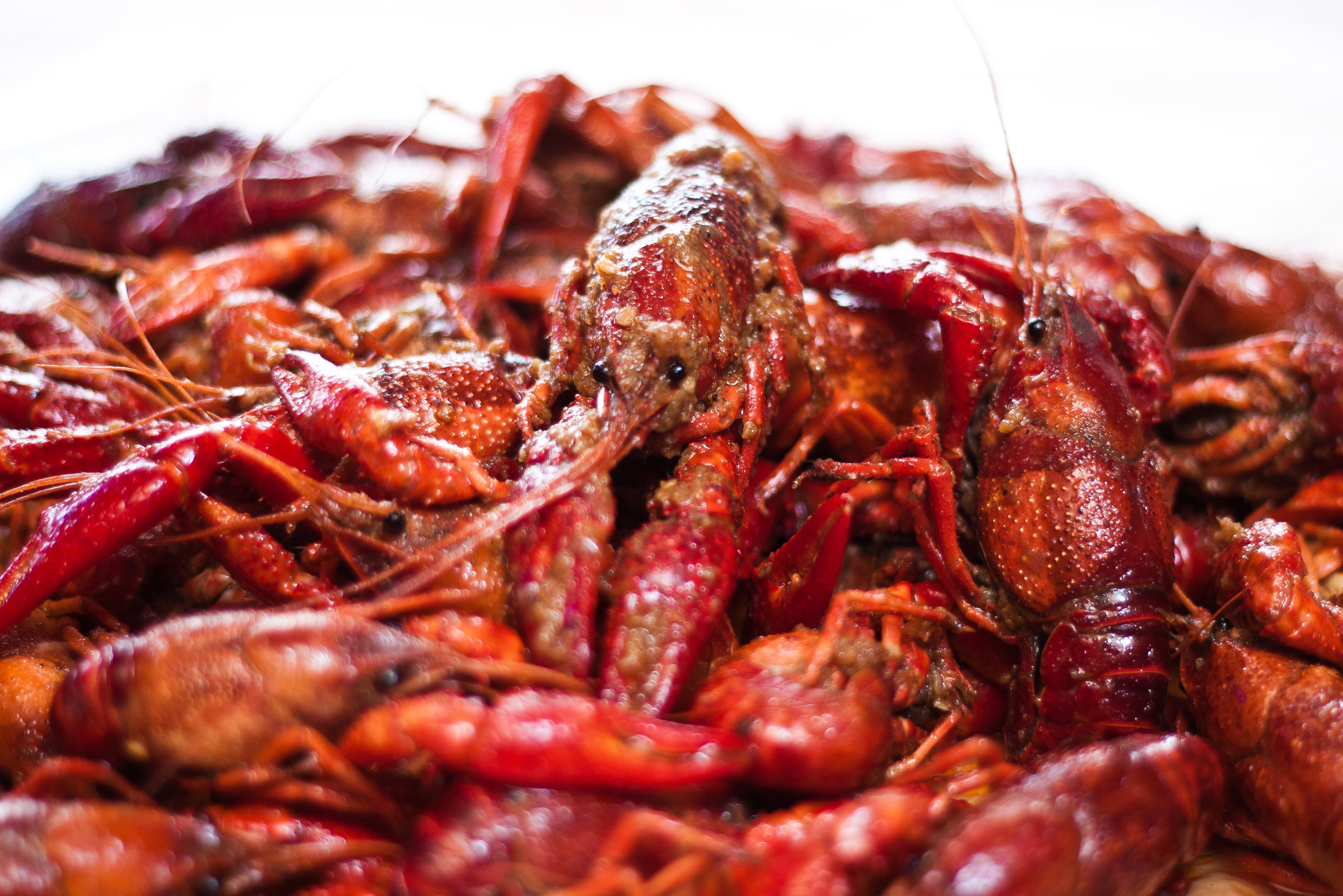 bucket-o-crawfish-131.jpg
