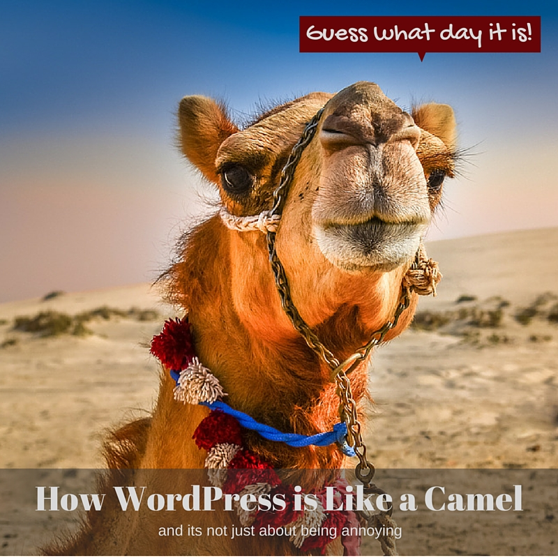 WordPress is like a camel because it was built by committee and it constantly needs attention