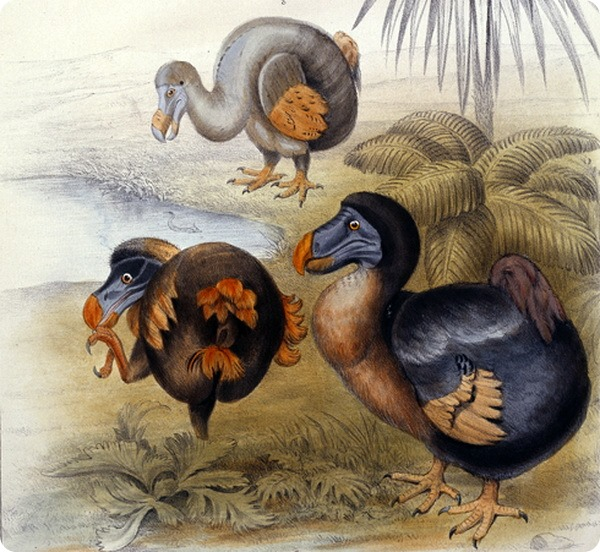 Marketing Like a raphinae or dodo? Maybe It's Time to get Off the Ground or Go Extinct.