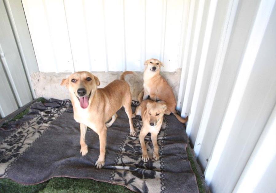 Dog Shelter 1.jpg