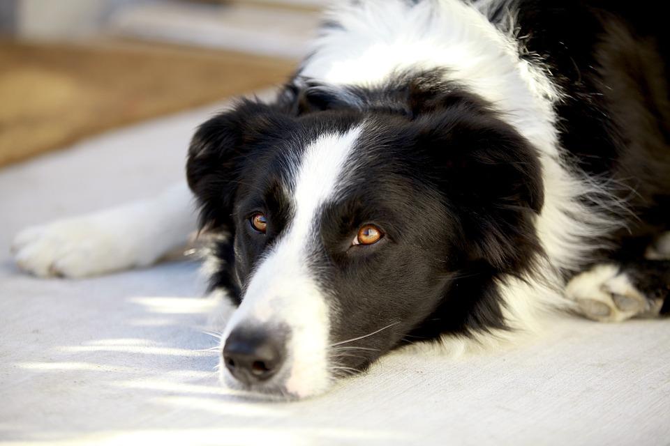Dog Shelter 3.jpg