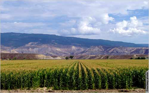 Colorado Agriculture photo.jpg