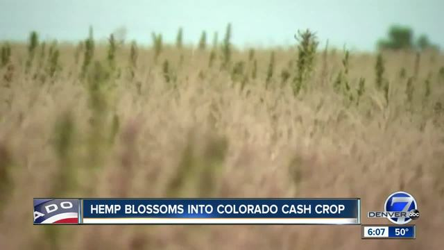 Colorado Hemp Growth.jpg