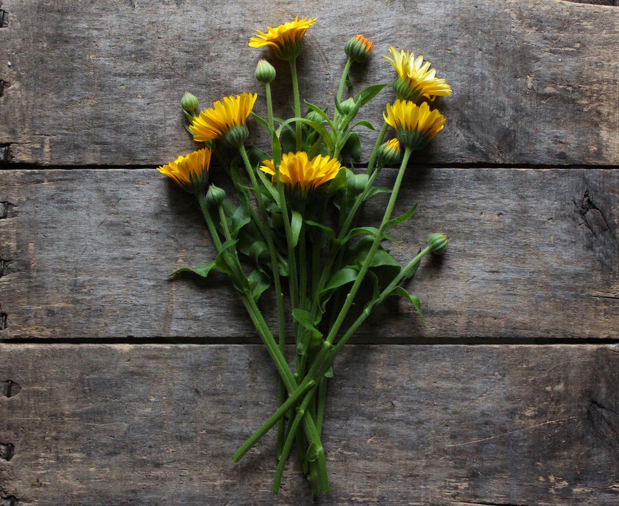 Shop: Organic Heirloom Herb Seeds