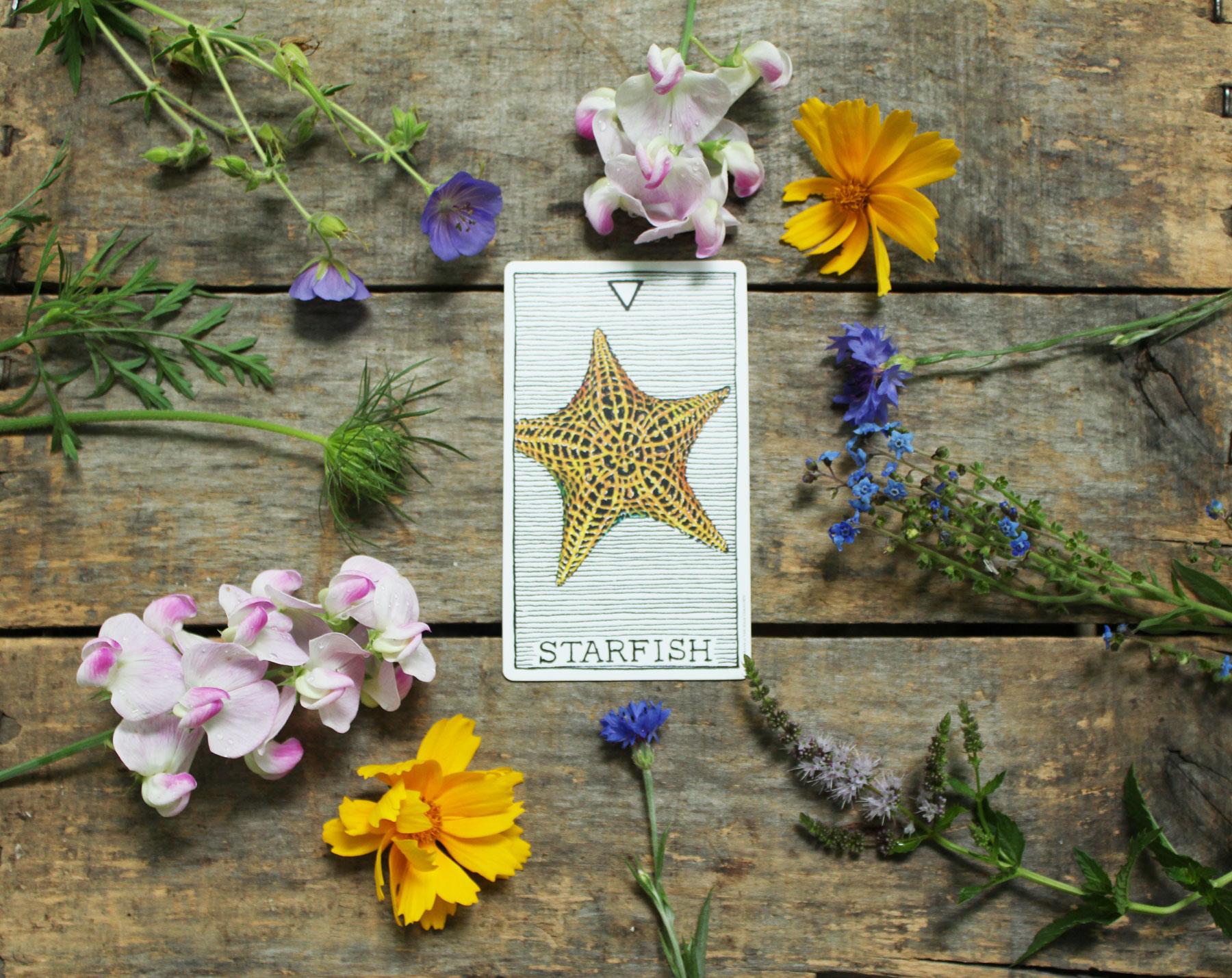 4-starfish.jpg